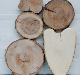 Slices (cuts) of a tree
