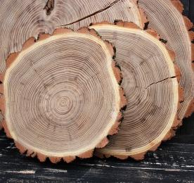 Спилы дерева, (поштучно) акация